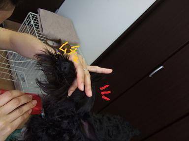 2008.03.16  ヴィクターくんとママ④