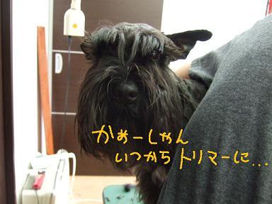 2008.03.16  ヴィクターくんとママ⑥