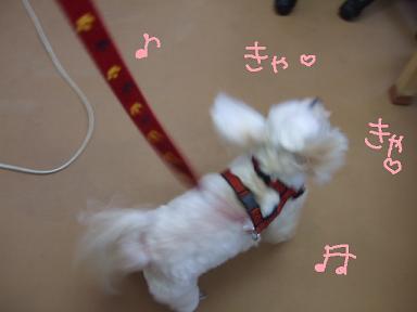 2008 4 1花子ちゃん④