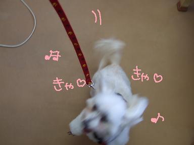 2008 4 1花子ちゃん⑤