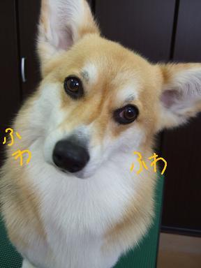 2008 4 1あさりちゃん③