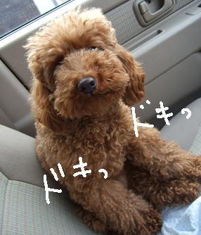 2008 04 05  くるみちゃん②