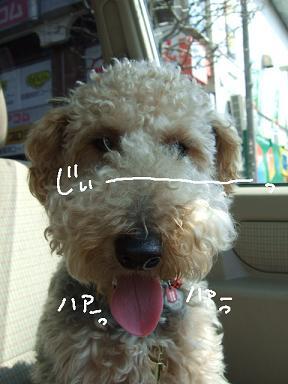 2008 04 06 ロックくん①