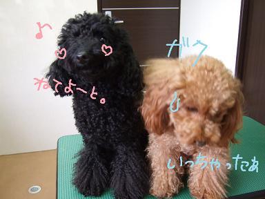 2008 04 11 ウール&アロア②