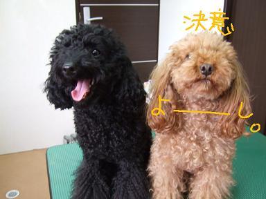 2008 04 11 ウール&アロア③