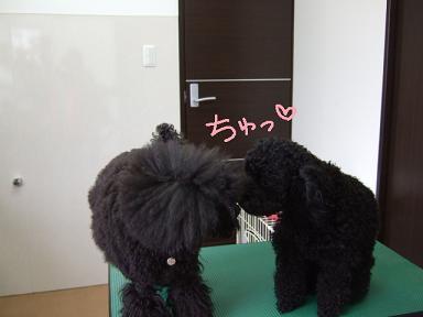 2008 04 11 パフ&クリン①
