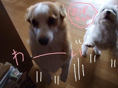 2008 04 12~13ミルちゃんお留守番①