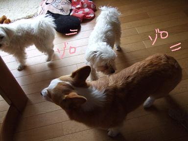2008 04 12~13ミルちゃんお留守番②