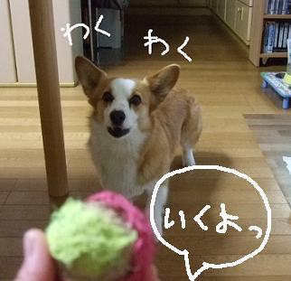 2008 04 12~13ミルちゃんお留守番④