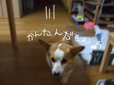 2008 04 12~13ミルちゃんお留守番⑥