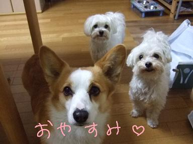 2008 04 12~13ミルちゃんお留守番⑧