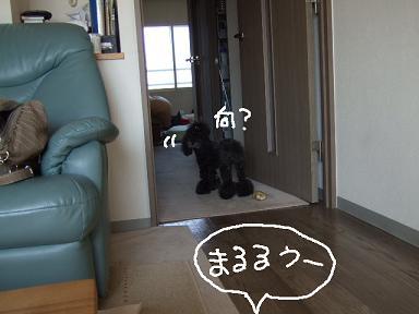 2008.04.15  まるママ⑤