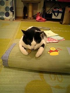 イグサの枕は・・・うとうと