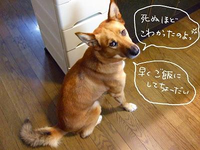 2006_10120014(2).jpg