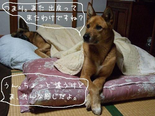 2007_03070009-1.jpg