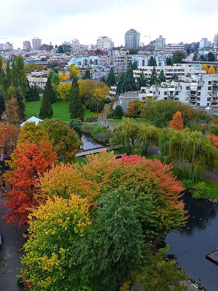 橋の上から綺麗な紅葉が