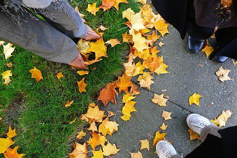 落ち葉を囲む