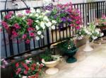 _garden2.jpg