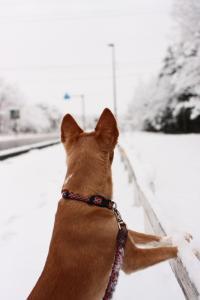 雪の朝-みみ