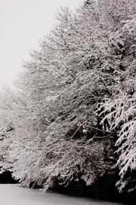 雪の朝-風景02