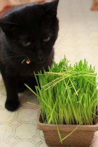 猫草パーティー01