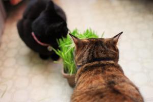 猫草パーティー02