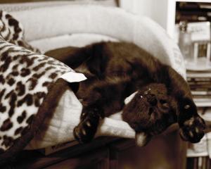 タイガー寝姿落下前
