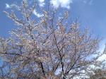 桜0408