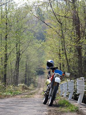 春の林道2