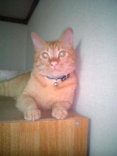 Jazzmin猫ですよ~。