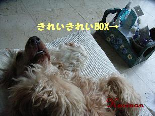 ブログ 3.10 ② RIMG4005