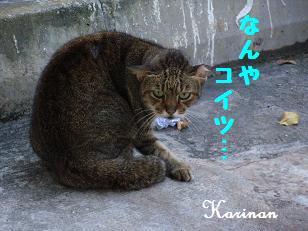 ブログ 3.11 ① RIMG3929