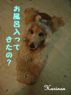 ブログ 4.3 ⑤ RIMG4518
