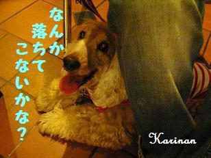 ブログ 4.5 ① RIMG4607