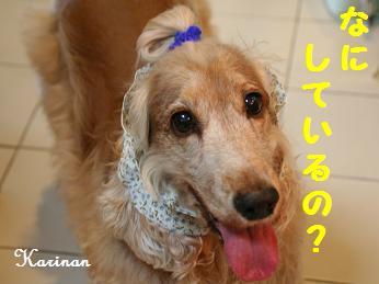 ブログ 4.17 ③ コピー (1) ~ IMG_7403