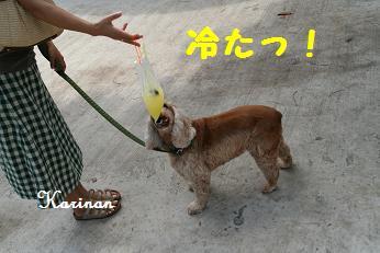 ブログ 5.6 ② IMG_7990