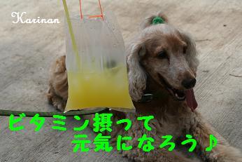 ブログ 5.6 ④ IMG_7992