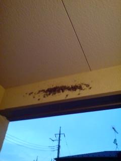 ツバメの巣の始まり
