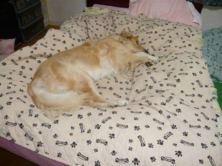 ベッドの上2ブログ