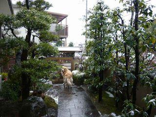 雪の日ブログ3