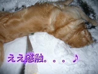大雪ブログ3