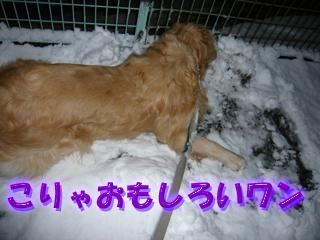 大雪ブログ4