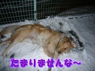 大雪ブログ5