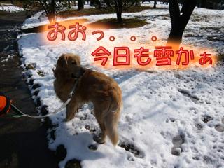 山田池公園雪1ブログ