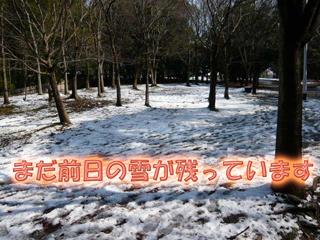 山田池公園雪2ブログ