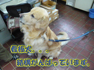 看板犬ブログ1