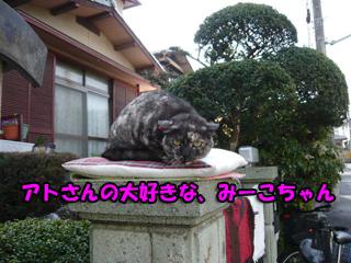 みーこちゃんブログ1