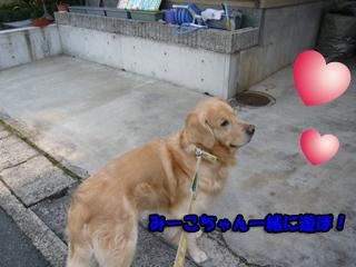 みーこちゃんブログ2