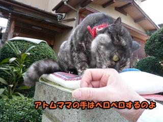 ミーコちゃんブログ3