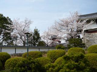 桃山城ブログ4